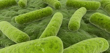 bacteria-legionela-control